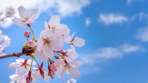 幸せを願う四字熟語②:新春万福(しんしゅんばんぷく)