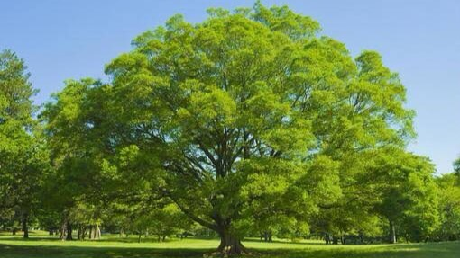 幸せを意味する四字熟語⑮:一樹百穫(いちじゅひゃっかく)