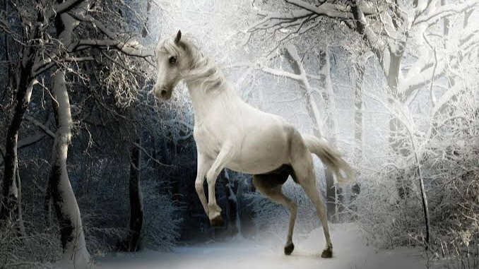 動物を含む四字熟語「馬」③:烏白馬角(うはくばかく)