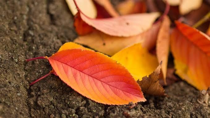 「秋を感じること」を表す四字熟語②:新涼灯火(しんりょうとうか)
