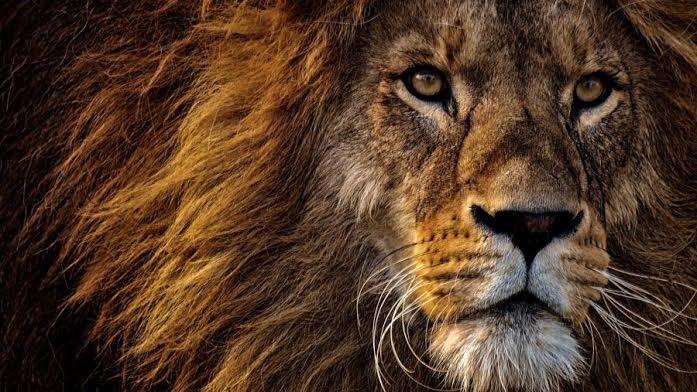 【体育祭スローガンの四字熟語】強さアピール系①:獅子奮迅(ししふんじん)