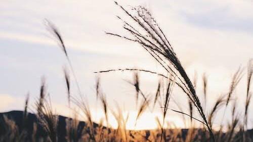 「秋の風景」を表す四字熟語②:秋風索莫(しゅうふうさくばく)