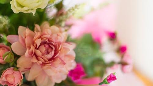 「珍しいこと」を表す四字熟語④:鉄樹開花(てつじゅかいか)