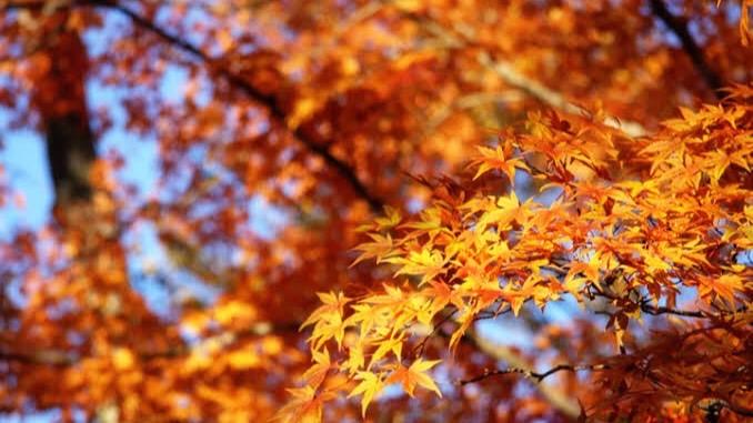 「秋を感じること」を表す四字熟語①:刻露清秀(こくろせいしゅう)