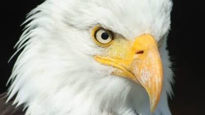 動物を含む四字熟語「鳥」④:鷲目兎耳(えんもくとじ)