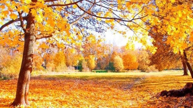 「秋を感じること」を表す四字熟語③:風霜高潔(ふうそうこうけつ)