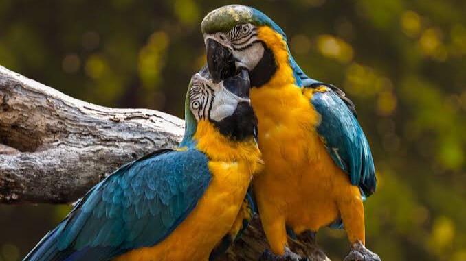 動物を含む動物を含む四字熟語「鳥」③:慈烏反哺(じうはんぽ)熟語「鳥」②:檻猿籠鳥(かんえんろうちょう)