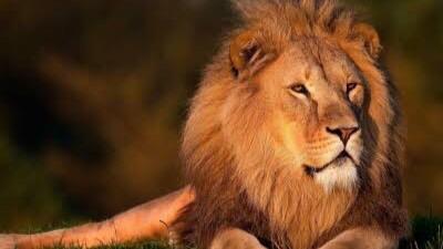動物を含む四字熟語「獅子」①:獅子奮迅(ししふんじん)